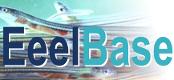 EeelBase